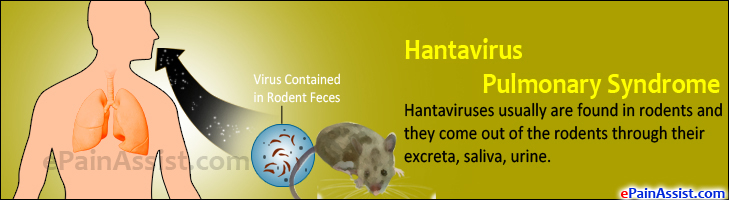 hantavirus research paper View hantavirus research papers on academiaedu for free.