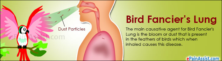 Bird Fancier's Lung
