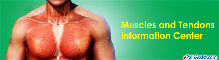 Muscles and Tendons Information Center