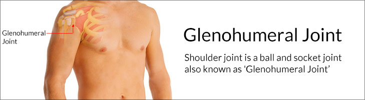 Understanding Shoulder Joint or Glenohumeral Joint
