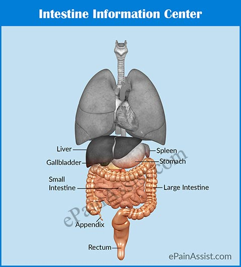 Intestine Information Center