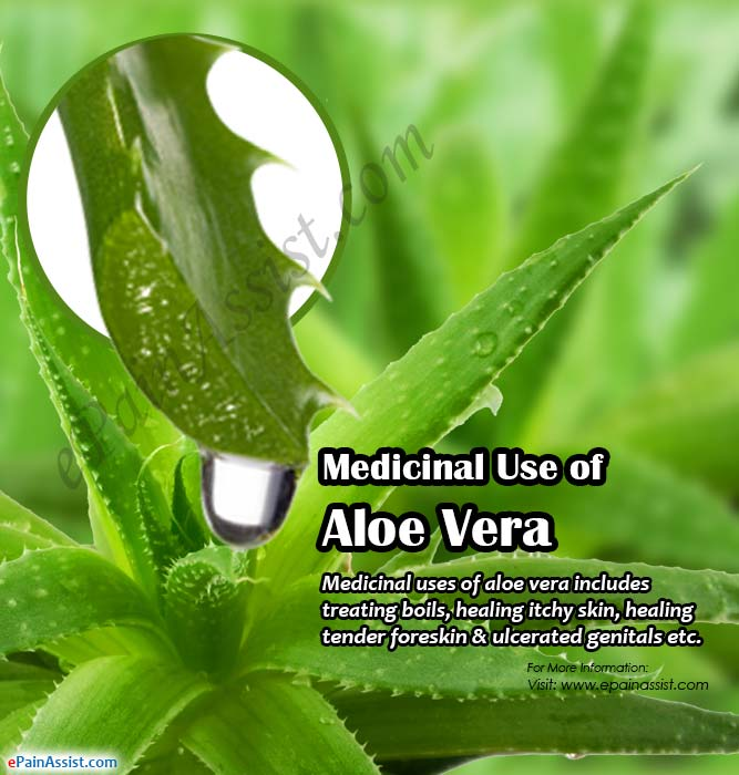 Medicinal Use of Aloe Vera