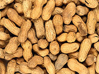 Careful testing can determine whether you need to avoid cashews, walnuts or others, study finds.