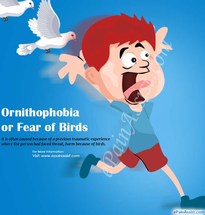 Ornithophobia or Fear of Birds