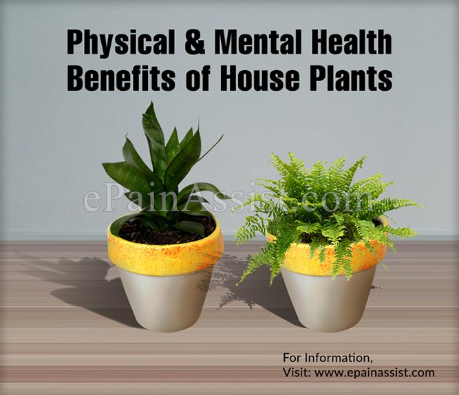 Physical Health Benefits of House Plants