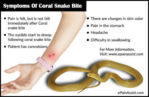 Symptoms Of Coral Snake Bite
