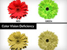 Color Blindness or Color Vision Deficiency