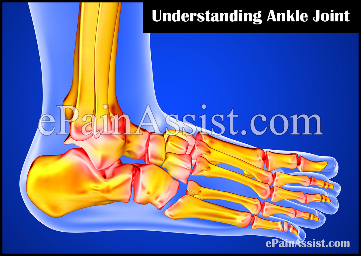 What Is Ankle Joint?