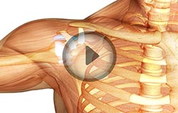 Shoulder Joint Anatomy: Glenohumeral, Acromio-Clavicular Joints