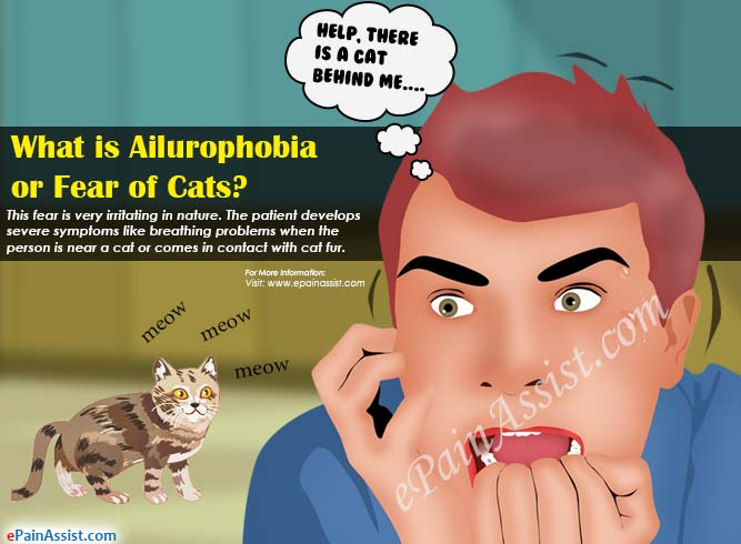 What is Ailurophobia or Fear of Cats?