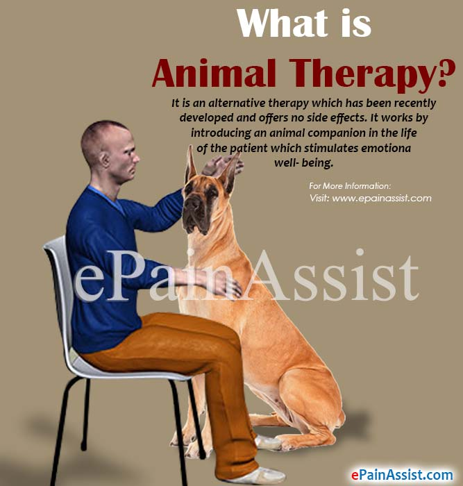 What is Animal Therapy?