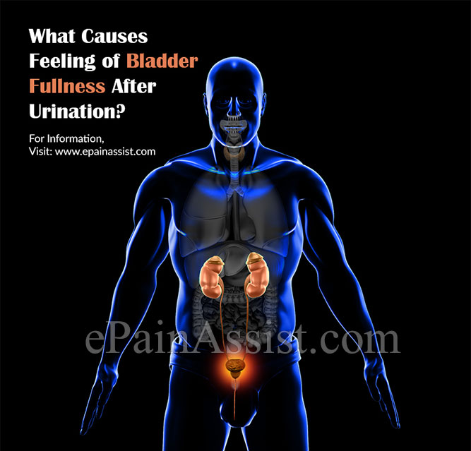 What Causes Feeling of Bladder Fullness After Urination?