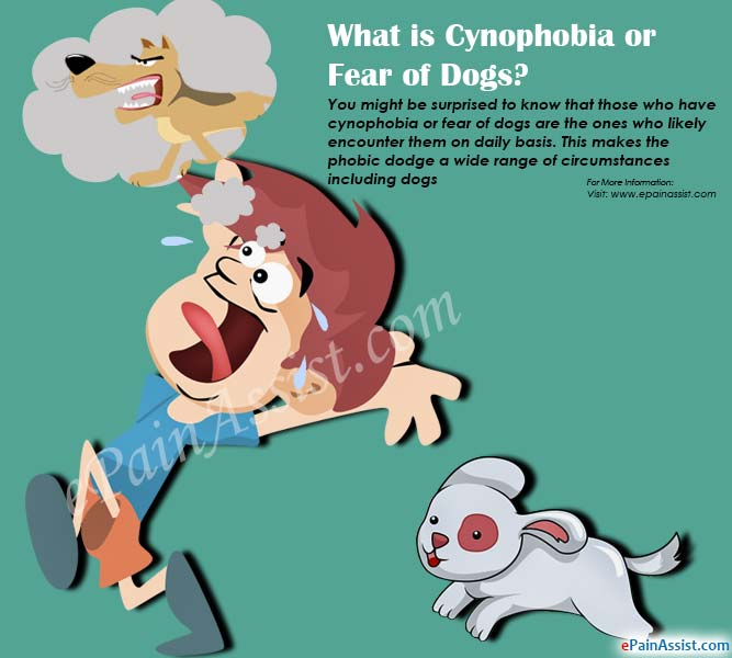 What is Cynophobia or Fear of Dogs?