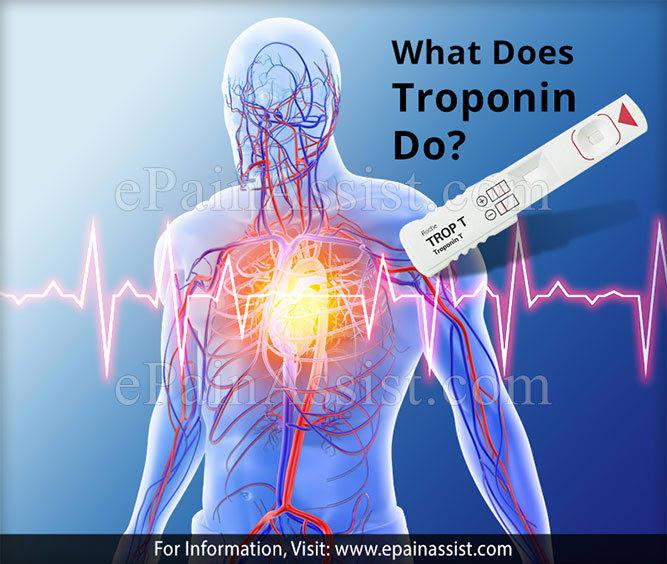 What Does Troponin Do?