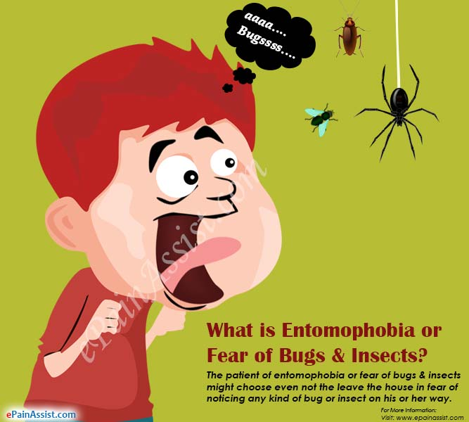 What is Entomophobia or Fear of Bugs & Insects?