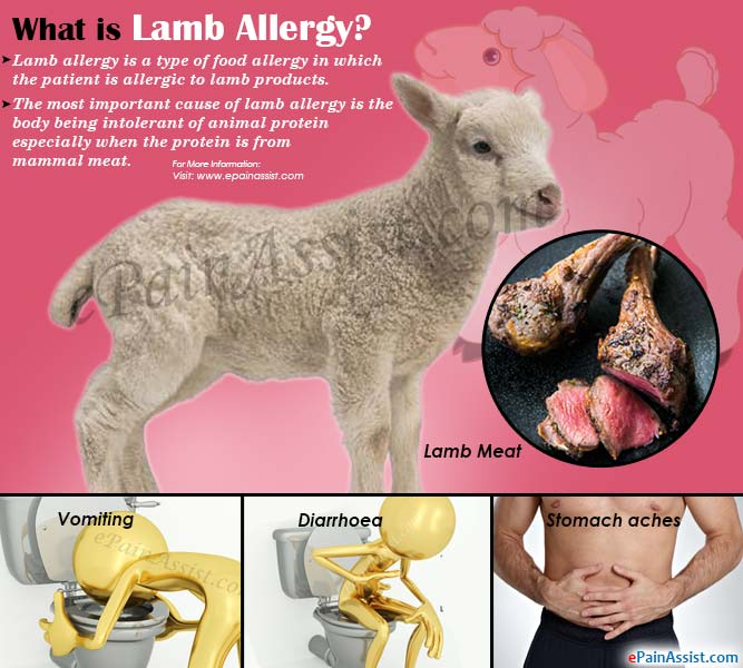 What is Lamb Allergy?
