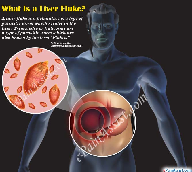 What is a Liver Fluke?