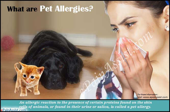 What are Pet Allergies?