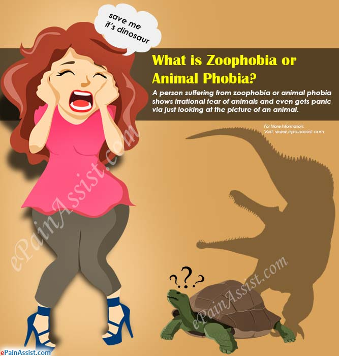 What is Zoophobia or Animal Phobia?